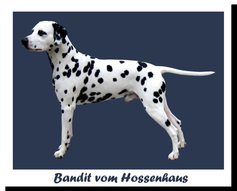 Bandit vom Hossenhaus